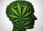 la législation française interdit actuellement la culture des plants contenant des taux supérieurs à 0,2% de THC