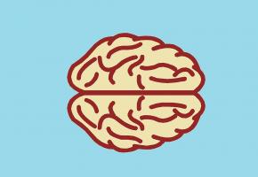 La communication entre intestin et cerveau est à l'évidence bilatérale